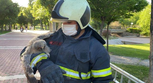 Yuvadan Düşen Yavru Kulaklı Orman Baykuşu Koruma Altına Alındı