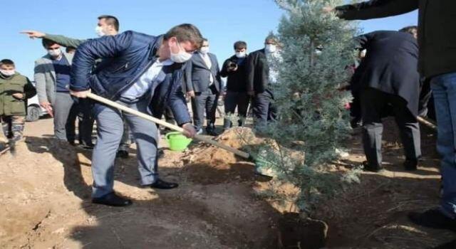 İki Buçuk Yılda 50 Bin Ağaç Toprakla Buluştu