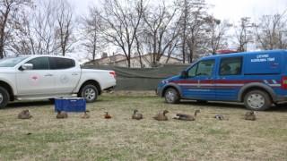 Jandarmadan Kaçak Kuş Operasyonu
