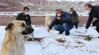 Sokak Hayvanlarına Yiyecek ve Mama Bırakıldı