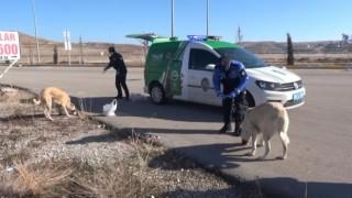 Hayvan Koruma Polisleri Sokak Hayvanlarının Tüm İhtiyaçları Karşılıyor