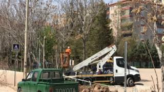 Tehlike Yaratan Ağaçlar Budanıyor