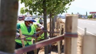 E-90 Karayolu Şeker Akçe Ağaçları İle Donatılıyor