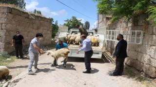 Kurdun 10 Koyununu Telef Ettiği Yetiştiriciye Valilikten Koyun Desteği