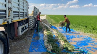 Sular Çekildi, Üreticiler Az Su İsteyen Ürünlere Yöneldi