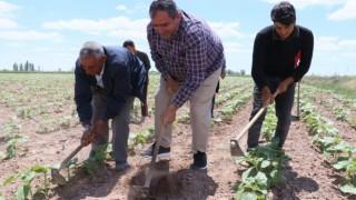 Tarımsal Üretim Hız Kesmeden Devam Ediyor