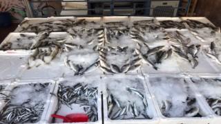 Balıklar Tezgâhlarda