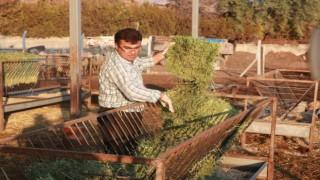 Hibe Destekli Projelerle Tarım ve Hayvancılık Hızla Gelişiyor